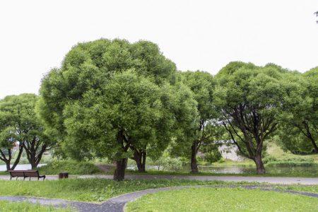 Про псковичей и народную любовь к зеленым зонам власти вспоминают тогда, когда есть потребность в красивом жесте.