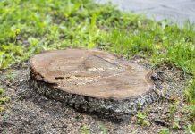 27 деревьев посажено в Пскове в 2016 году, 754 дерева спилено или обрезано