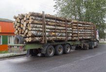 Лес рубят, а жители Плюсского района от этого ничего не получают